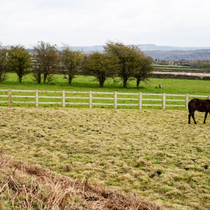 Horses near Meltham, West Yorkshire