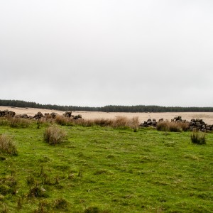 Moorland near Withens Clough reservoir 3