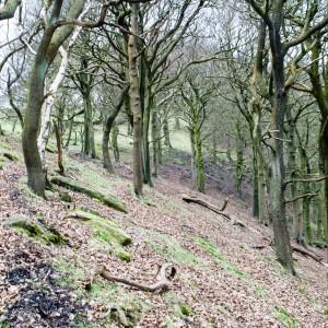 Woodland near Cragg Vale