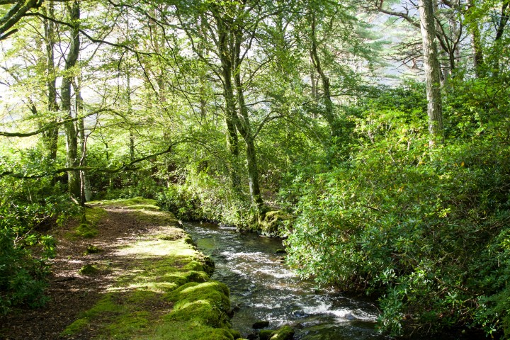 Lochbuie River & Woodland
